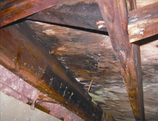 mold and rot in a Meridian crawl space