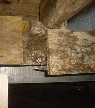 Home Mold Amp Dust Mite Problems In Mississippi