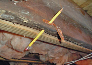 Destroyed crawl space structural wood in Ellisville
