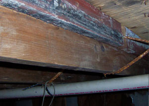 Rotting, decaying wood from mold damage in Collins